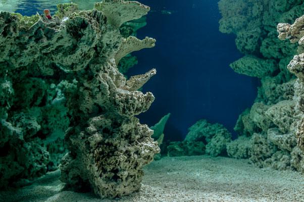 Meereswasser Aquarium mit künstlichem Korallenriff