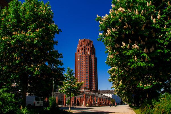 Blick zwischen den blühenden Kastanien-Bäumen auf das Main Plaza Hotel in Frankfurt am Main