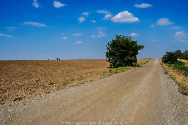 Einsam in der sonnigen Steppe von Stawropolskij krai