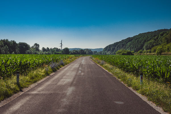 Maisfelder bei Leibnitz