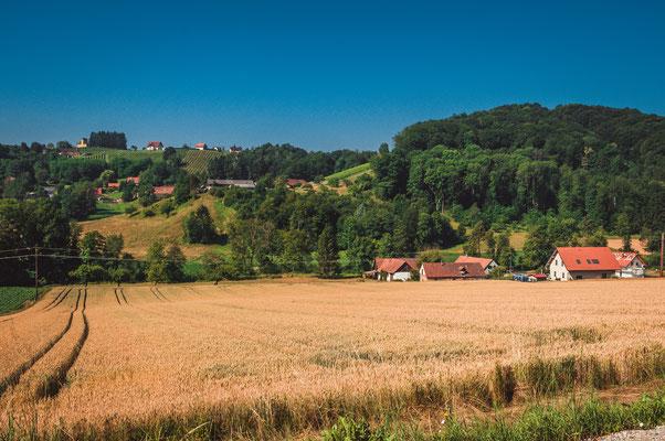 Weizenfeld bei Seiersberg