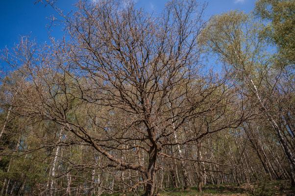 Der Wald von Daaden