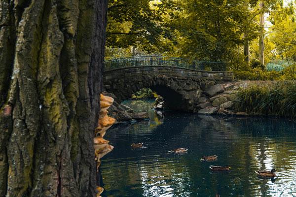 Teich im Von Bernus Park in Frankfurt