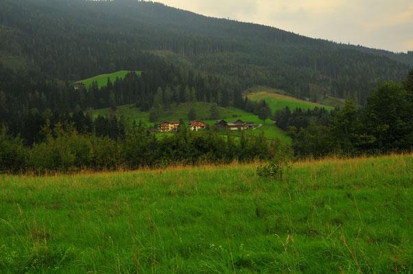 Weiden-Landschaft