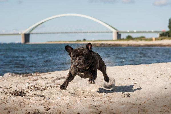 Urlaaaaaaub.... Lotti liebt den Strand