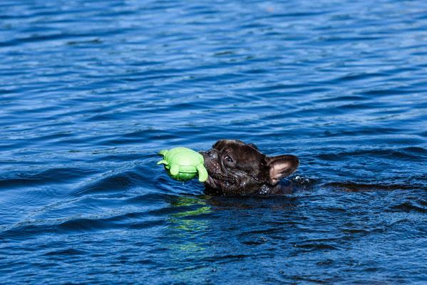Lotti schwimmt und apportiert für sein Leben gern