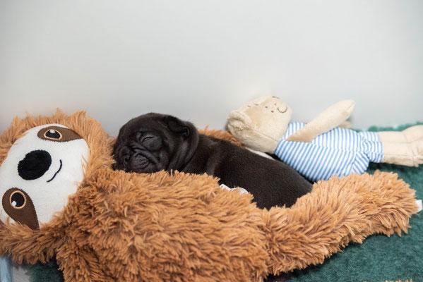 Mittagsschlaf mit Fauli und Björn.