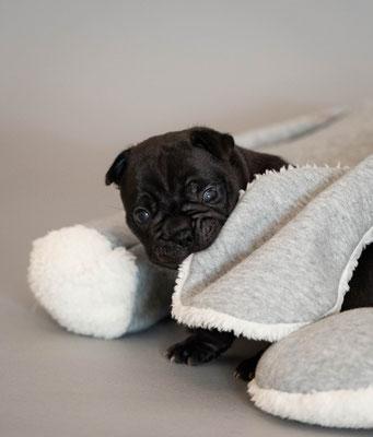 Alles wird derzeit angeknabbert - selbst sein Schlafkuscheltier.