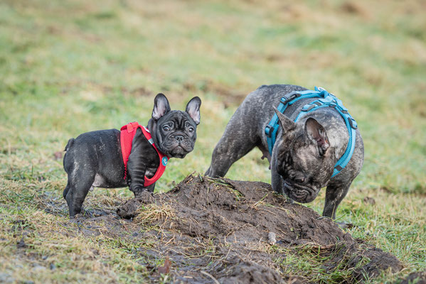 Was schaust du so? Mama hat gesagt: Nur dreckige Hunde sind glückliche Hunde.