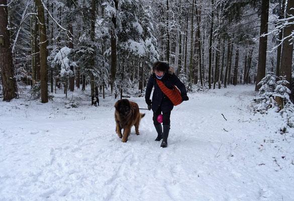 Es gibt verschiedene (und lustige) Aufgaben für Hund und Mensch..