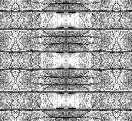 Kronen_WALD_02, bis max. 80 x 87 cm, Aufl. 50