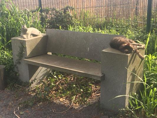 Hundepension Hundebetreuung Lippstadt Oelde Beckum Soest Anröchte Erwitte Rheda Bad Sassendorf Geseke Lippetal Wadersloh Langenberg