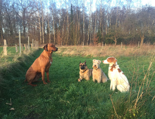 Hundepension Hundebetreuung Lippstadt Oelde Beckum Soest Anröchte Erwitte Rheda Bad Sassendorf Geseke Lippetal