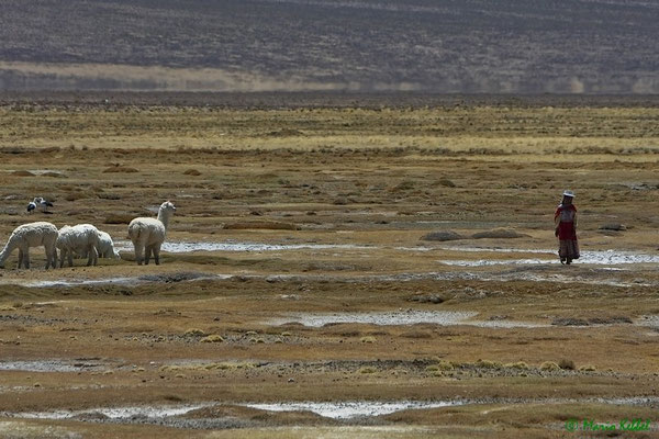 Landschaft Peru's