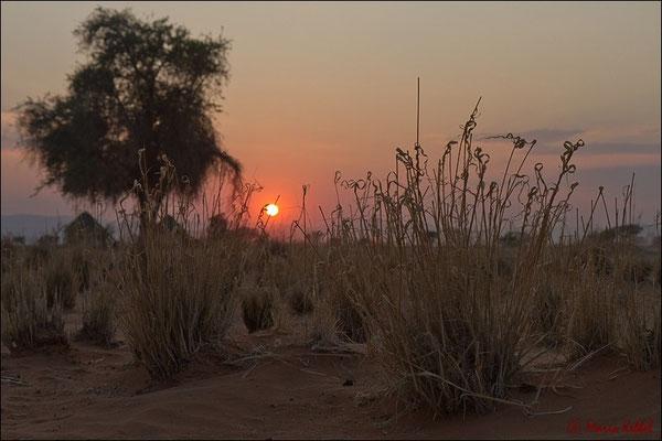 Sonnenaufgang in der Namib