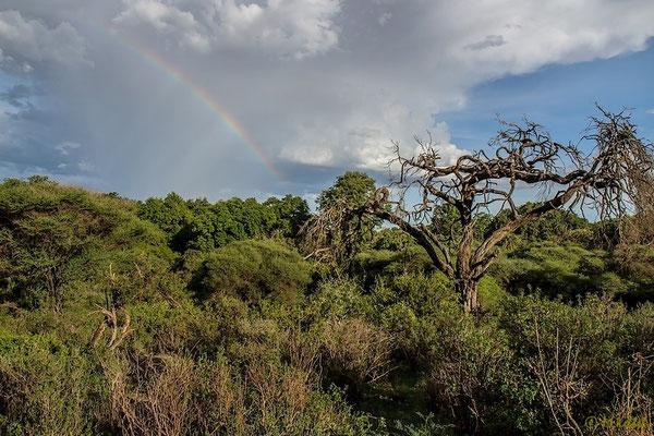 Regenbogen über dem Lake Manyara Nationalpark