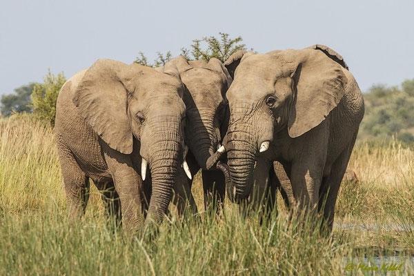 Südafrika: Elefant - Familienbande