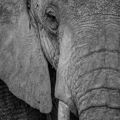 Tansania: Elefant - Portrait