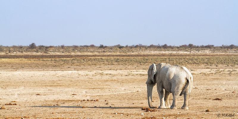 Namibia: Elefant