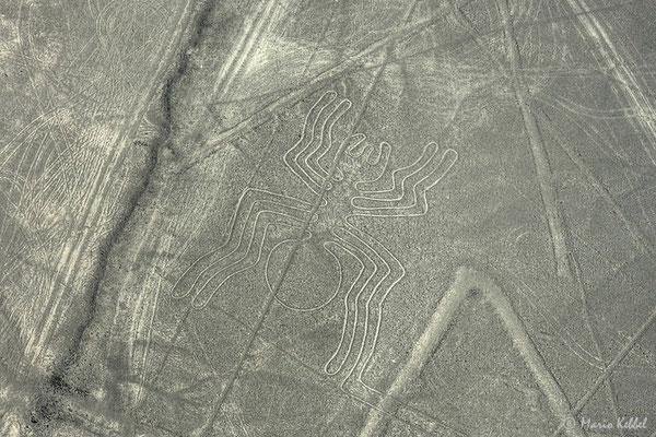 Flug über die Nazca Linien - Spinne