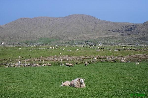 Fahrt entlang am Ring of Kerry
