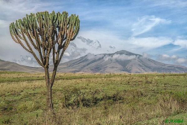 Am Ngorongoro Kraterrand
