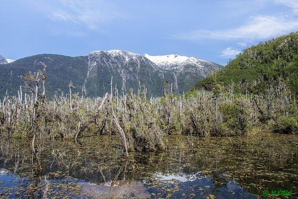 Chile: Tote Bäume am Lago Yelcho