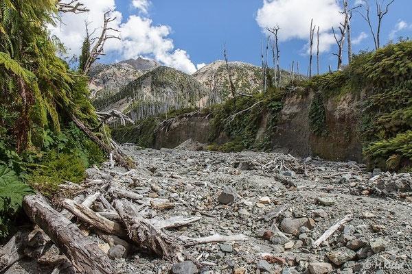 Chile: Verwüstung durch den Vulkan Chaitén