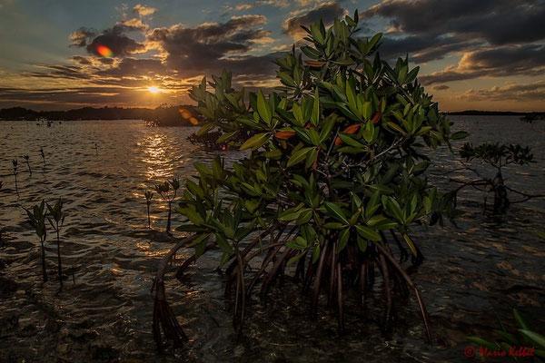 Zwischen Mangroven