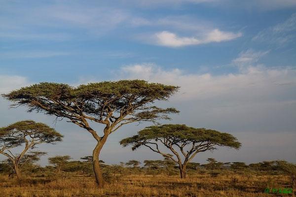 In der südlichen Serengeti geht die Sonne auf