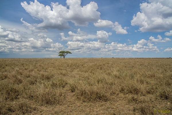 Die nördliche Serengeti