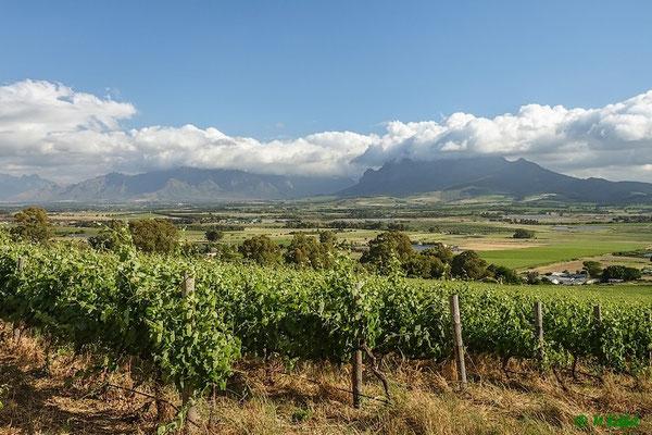 Im Weingebiet von Paarl