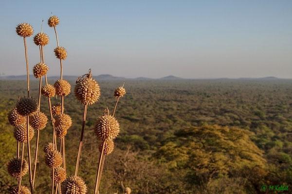 Blick über den Ruaha Nationalpark