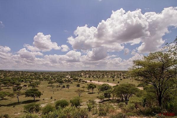 Im Tarangire National Park