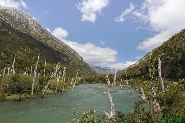 Chile: Tote Bäume