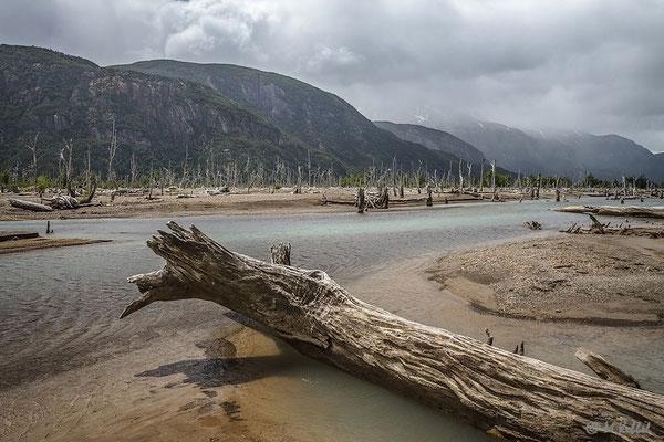 Chile: Valle de los Arboles Muertos