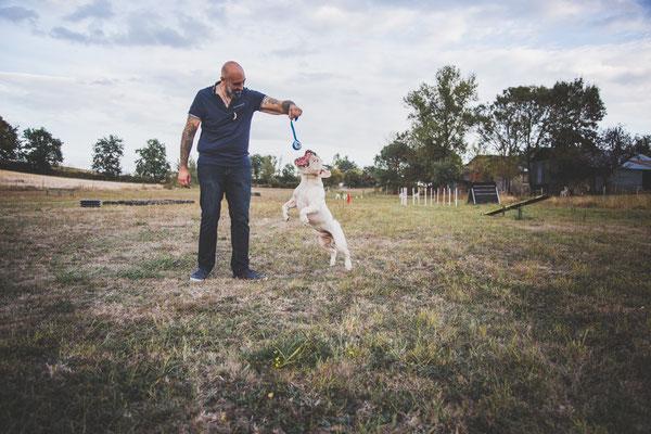 reportage photo élevage, photo d'élevage, photographe animalier, photo de chiens toulouse, old english bulldog