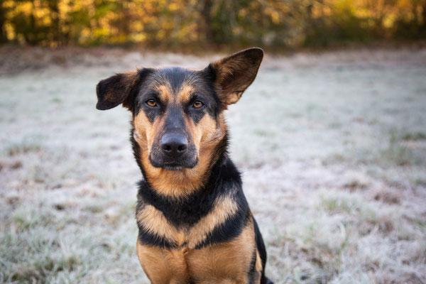 photographe chien toulouse, portrait chien photo, photographe animalier