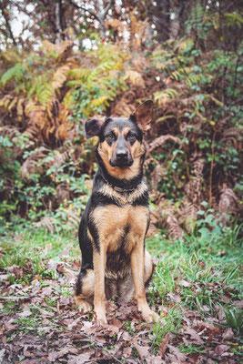 photographe chien toulouse, photo chien extérieur, séance photo chien toulouse