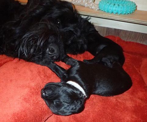 Yuma wacht über ihre Babys