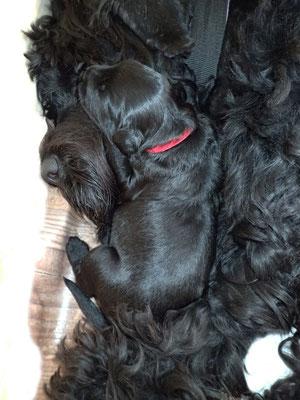 Ganz nah bei der Hundemama kuscheln. Eines unserer Lieblingsbilder.