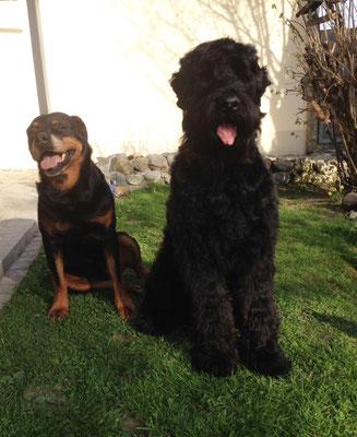 Carlo (Attila) mit seiner kleinen/grossen Rottweiler-Schwester Kira