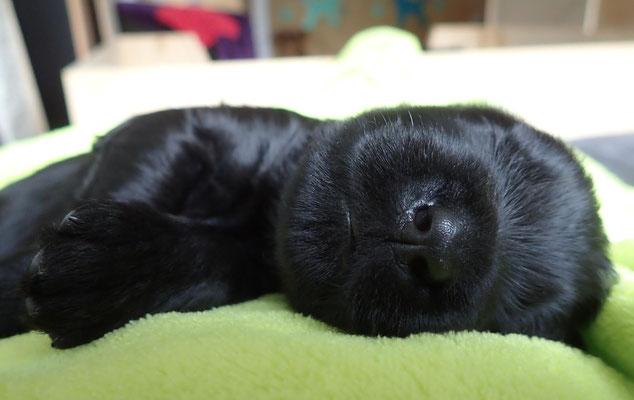 Stundenlang könnten wir diese kleinen süssen Schwarznasen ansehen