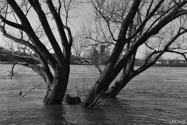 Flood Waters Idyll no3  *limit 10
