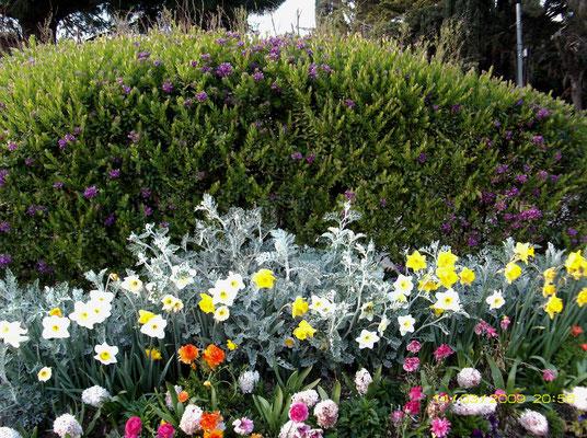 Frühlingsblühen in der Provence