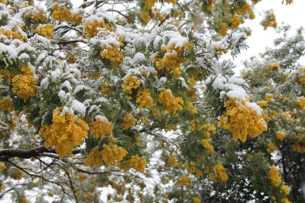 Seltener Anblick: Das Butterhäuschen im Schnee