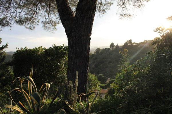 links und rechts der Auffahrt wachsen wilde, für die Region typische Pflanzen