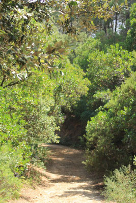 Wandern im nahe gelegenen Massif des Maures