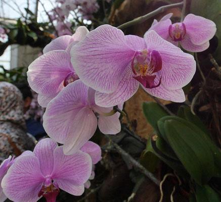 Orchideenausstellung im Palmengarten