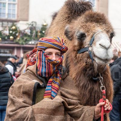 Zwei echte Kamele wurden durch das Städtchen geführt.